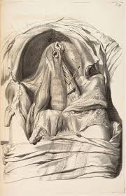 Figure Drawing Design And Invention 6th Edition Against The Statue Anatomized The Art Of Eighteenth