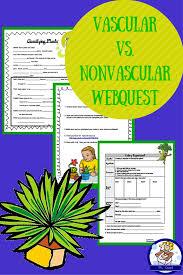 Venn Diagram Of Vascular And Nonvascular Plants Vascular Vs Nonvascular Plants Webquest And Celery