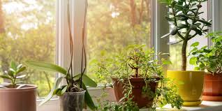 9 Benefits of Indoor Plants (That Are Scientifically Proven)