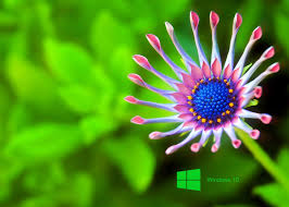 windows 8 wallpaper hd 1080p flower. Laptop Wallpapers HD For Windows 10 Photo Download To Wallpaper Hd Flower