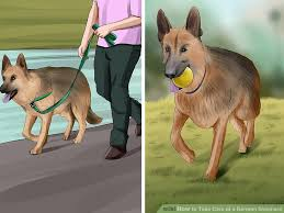 German Shepherd Exercise Chart How To Take Care Of A German Shepherd With Pictures Wikihow