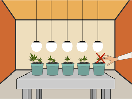 Pot Plant Light Cycle How To Plant Cannabis Seeds Indoors 15 Steps With Pictures