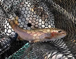 Yakima River Hatch Chart Yakima River Fly Fishing Report Yakima River Angler