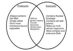 A Venn Diagram Of Prokaryotic And Eukaryotic Cells Eukaryotic Prokaryotic Venn Diagram Barca Fontanacountryinn Com