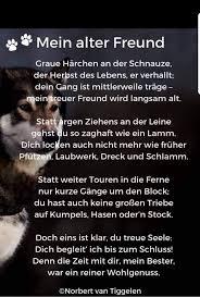 Tiere Gehen über Die Regenbogenbrücke Postimet Facebook