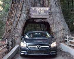 car driving through the chandelier tree
