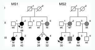 Genetic Family Tree Genetic Family Tree Tirevi Fontanacountryinn Com