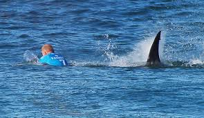 shark attack fanning s close encounter puts predators back on  the conversation shark attack jpg