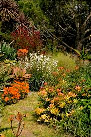 Small Picture 88 best indigenous garden South Africa images on Pinterest