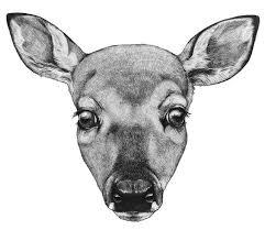 Deer Head Drawing The Deer Kind Drawings Deer Drawing Deer