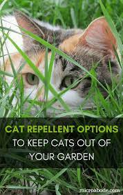 cat repellent options to keep cats out