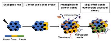 Unmasking Tumor Heterogeneity And Clonal Evolution By Single