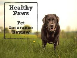 healthy paws pet insurance reviews healthy paws pet insurance review the 1 plan for