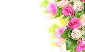 tender rose 1080p 2k 4k 5k hd
