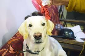 introduction diy dog dry shampoo