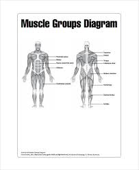 Muscle Chart 7 Free Pdf Documents Download Free