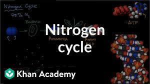 The Nitrogen Cycle Video Ecology Khan Academy