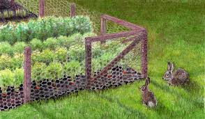 ilration of fence for keeping rabbits out of the garden