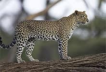 Tokeo la picha la best images of samburu nationa reserve