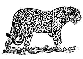 Small Picture Jaguar Roaring Coloring Pages Bulk Color