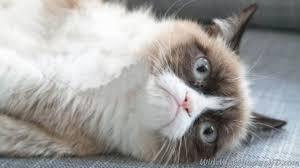 1080x1920 1080x1920 wallpaper grumpy cat cat pinocchio cartoon