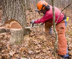 Logging Your Own Woods With Small Equipment Timbergreen Farm