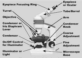 Parts Of The Microscope Compound Microscope