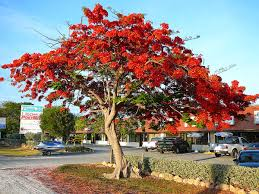 flower tree pictures. Delighful Flower With Flower Tree Pictures R