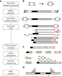 Illumina Sequencing Flow Chart Transposon Insertion Profiling By Sequencing Tipseq For
