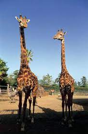 フェニックス 自然 動物園