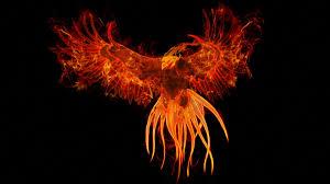photo collection 1600x900 hd desktop wallpaper phoenix