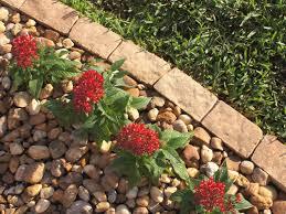 Diy Lawn Edging Ideas 10 Garden Edging Ideas With Bricks And Rocks Garden Lovers Club