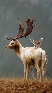 Deer Autumn Cute Animals 4K Wallpaper ...