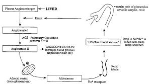 Renin Angiotensin Aldosterone Anp
