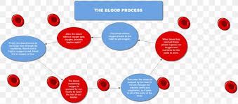 Flowchart Diagram Circulatory System Coagulation Blood Png