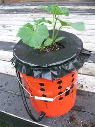 bucket gardening. Bucket Gardening