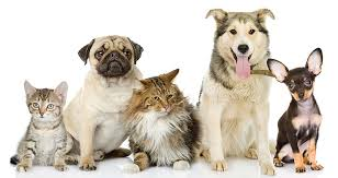 From suppliers Pet Products & Components