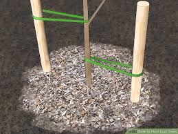 Fruit Trees For Your Backyard Orchard How To GrowWhen Do You Plant Fruit Trees