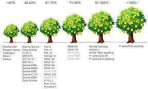 Tree Root Size Chart Rootstocks Wsu Tree Fruit Washington State University