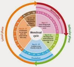 Period Cycle Pregnancy Chart Pin On Beauty Health
