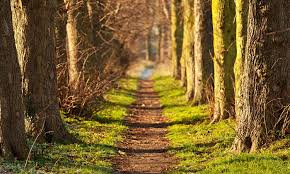 Say goodbye to stress with a 20-minute walk in nature - GulfToday