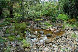 lawn and garden beds orchids and ferns path and pond a rocky pond a pond with ducks in residence pond and paperbarks