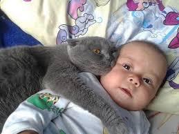 """Képtalálat a következőre: """"gyerek macskával"""""""