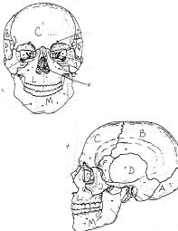 Small Picture Coloring Download Skull Bones Anatomy Coloring Pages Skull