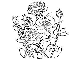 Small Picture Coloring Pages Of Roses Coloring Coloring Pages