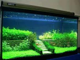 fish tank decoration ideas pour betta diy