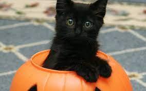 Halloween Kitten Wallpapers - 4k, HD ...