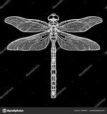 белая стрекоза Aeschna Viridls изолированные на черном фоне эскиз