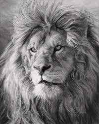 black and white lion portrait. Exellent Black Lion Painting  Portrait Of A Black And White By Lucie Bilodeau Fine Art America