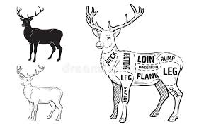 Deer Meat Cuts With Elements And Names Isolated Black On